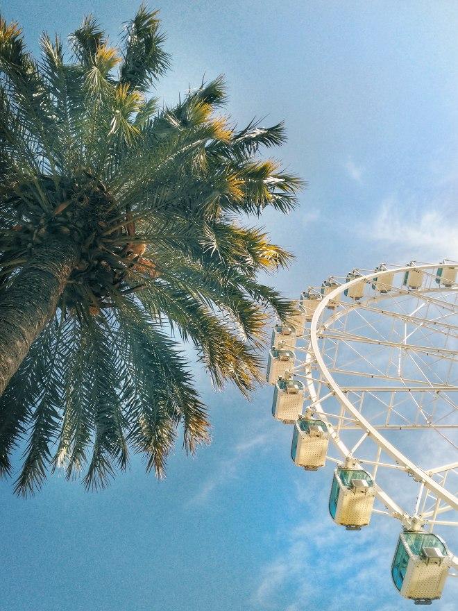 Eevagamunda Malaga palmu