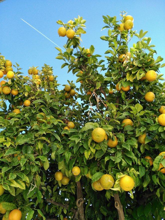 Malagassa appelsiinit kypsyvät talvella
