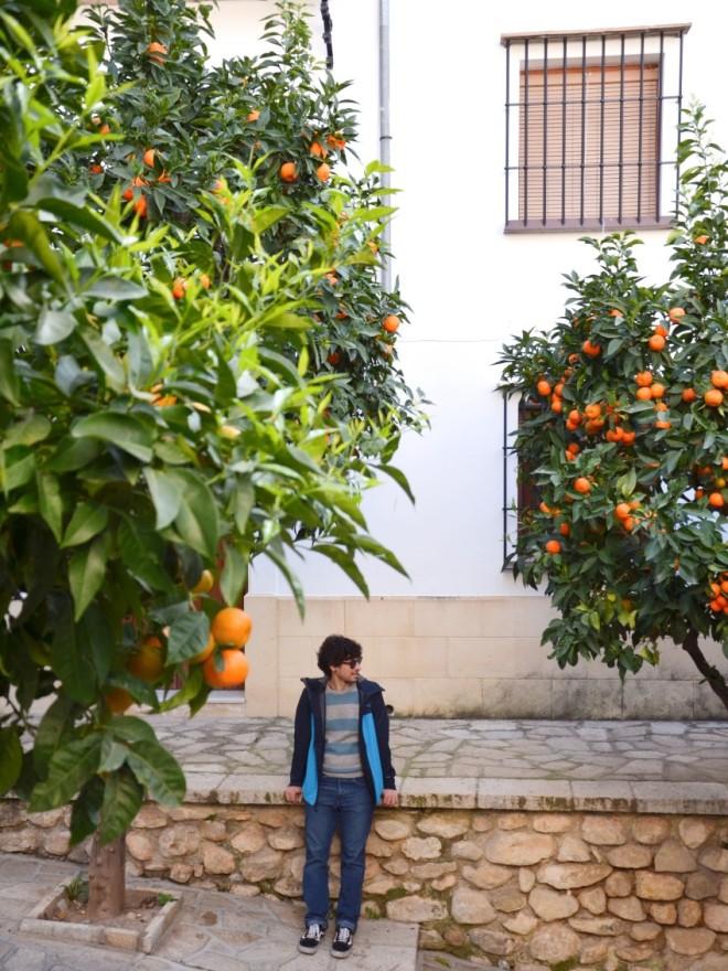 Antequera-appelsiinipuut